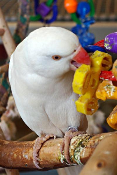 Fågelskådning (33).jpg