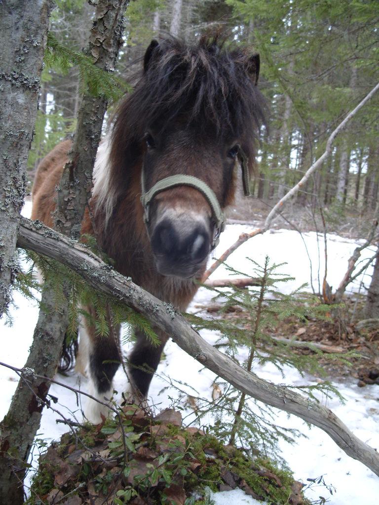 Årets iFokushäst