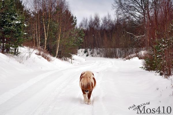 Tuffis på promenad.
