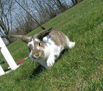 en alert kanin är en frisk kanin