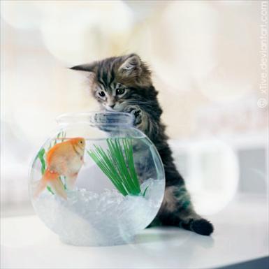 katt o fisk