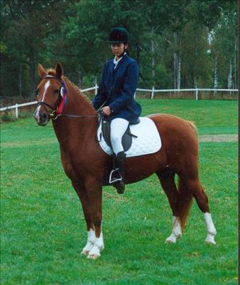 Dimmans Denitha RNF 187-S, Kvalitetsbedömning i Nybro 1998