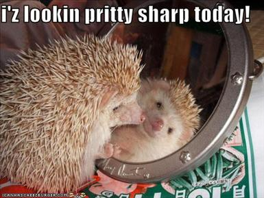 funny-pictures-hedgehog-looks-pretty-sharp-today.jpg