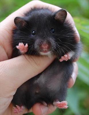 svart bebis.jpg