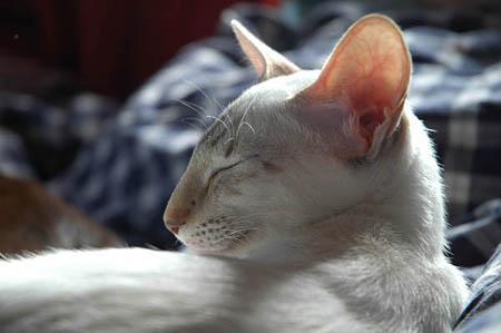 Kitty 6..jpg
