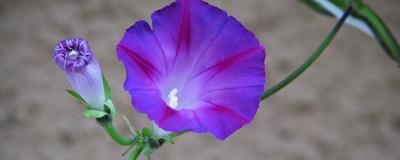 blomma_dagen_2.jpg