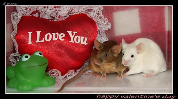 G_valentin_winner09.jpg