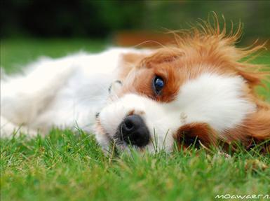 En av Moas hundar