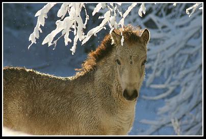 Russbilden December 2010