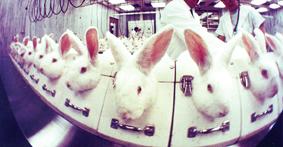Kaniner i kosmetikatest.jpg