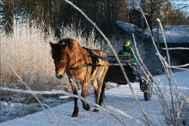 ponnytravbild-januari.JPG