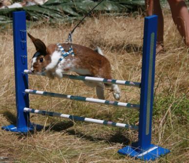 Bettan hoppar ca. 30cm (börja lägre, en bom, sedan två bommar
