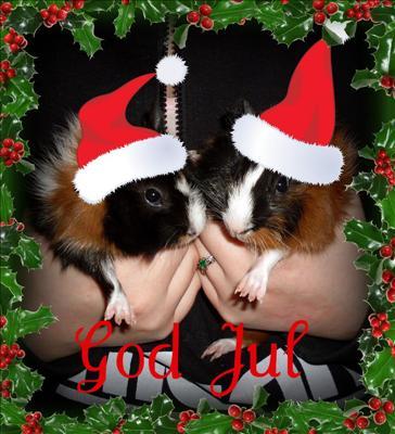 Marsvinslove önskar God Jul!