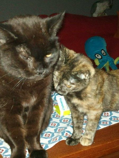 Wille tillsammans med en av kattungarna ur Debattias ärende