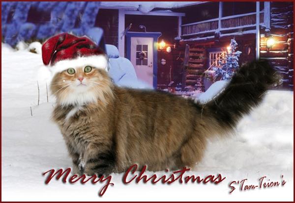 Vinnarbild i Jul- och Nyårstävlingen