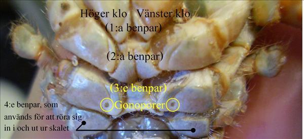 Kopia (3) av P4210794.JPG