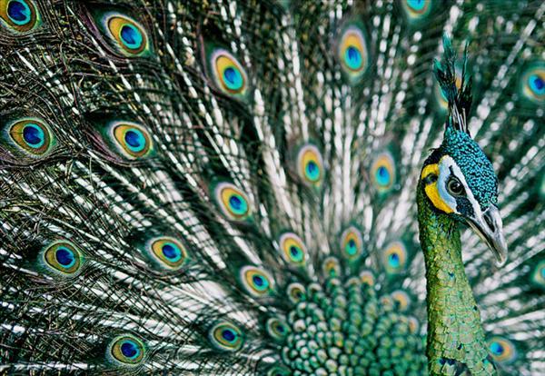 Fågelskådning (36).jpg