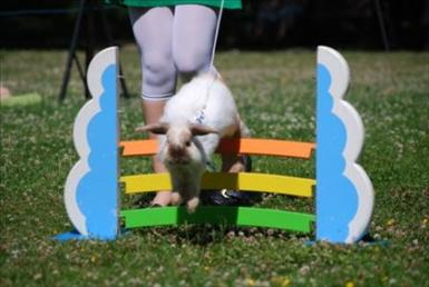 Lätt Ny får du tävla om din kanin ännu inte har några pinnar i lättklass.