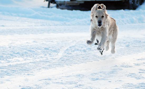 Månadens Hund - Januari