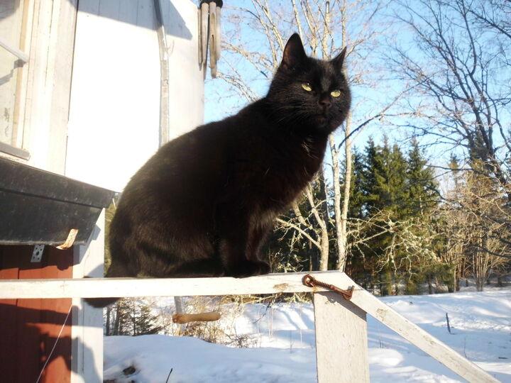 Katten- i en tid av ekologisk hållning