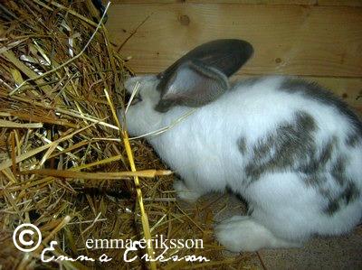 Kaniner har stort behov av att äta!