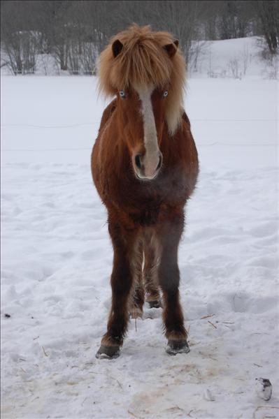 hästar 166.jpg