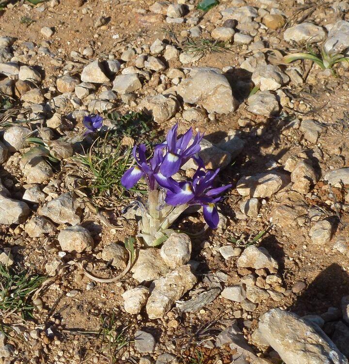 Blommor Fr 229 N Portugal 21 Resor Amp Kulturer Livskvalitet