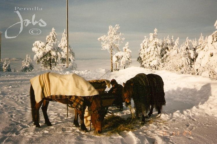Cajsa Kavat 4290 och Hera, Granberget Leksand 1996-11-24. Foto: Pernilla Jobs©