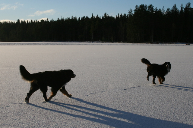 Tävling januari 2009
