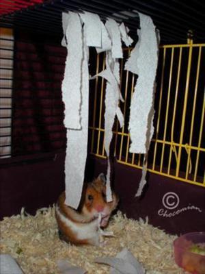 Aktivera din hamster