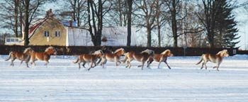 haflinger.jpg