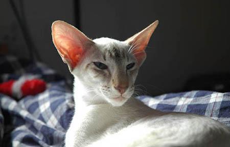 Kitty 5..jpg