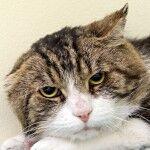 Nytt kattskyddsförbund bildat