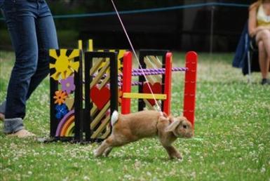 om kaninen springer förbi hindret får man lyfta tillbaka den framför hindret så den kan hoppa det. Man blir belastad med en korrigering.