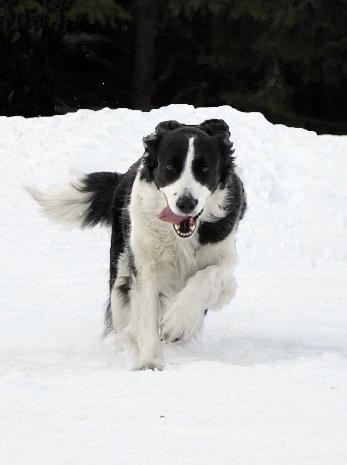 Månadens Hund - Februari