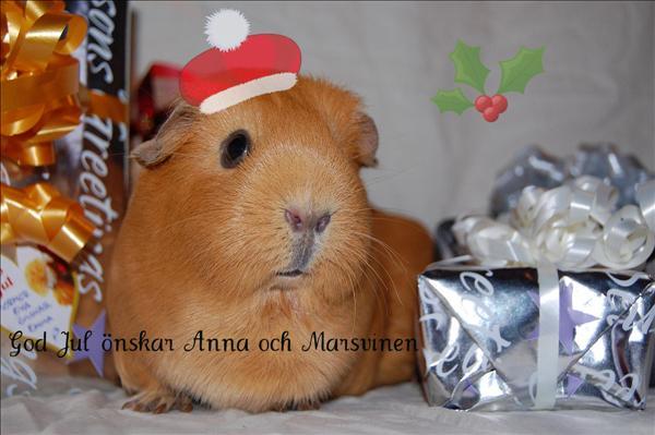 Stormviskaren önskar God Jul!