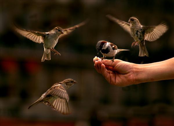 birds_k.jpg