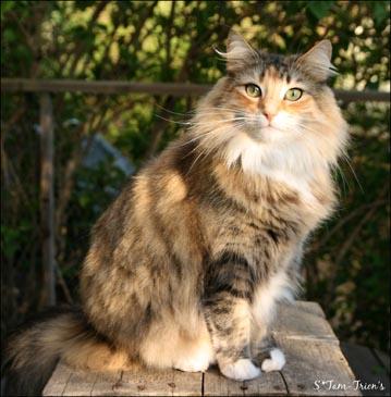 PR S*Kaup Home Cat's Adidas. Sissi är nöjd med bil