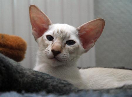 Kitty 1.jpg