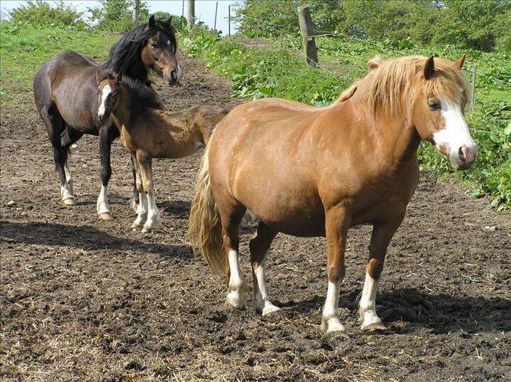 super boobs knulla med häst