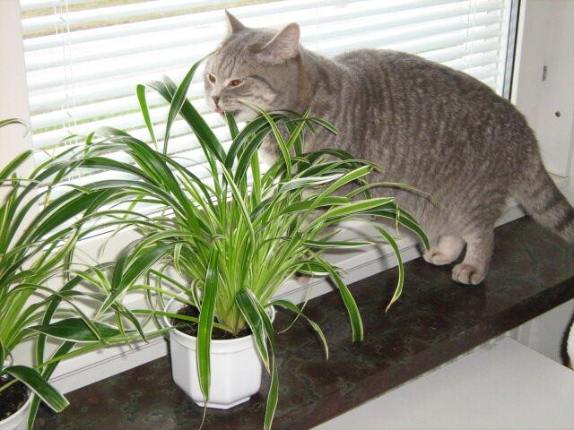 växter som katter tål