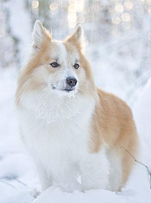 Månadens Hund - December