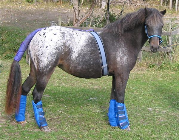 Här ser du en häst som är klar för att åka transpo