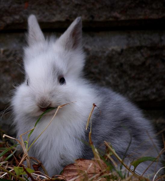 Kaninunge 4 veckor