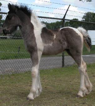 Shavo, 1 månad gammal