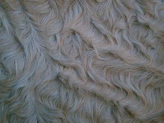 Curly_horse_closeup.jpg