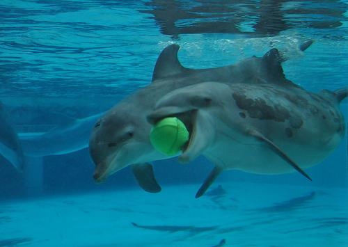 DelfinerLeker.jpg
