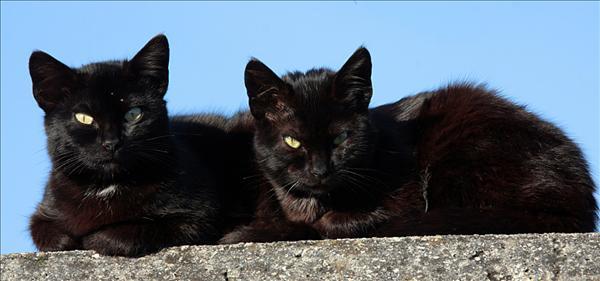 katthimmel.jpg