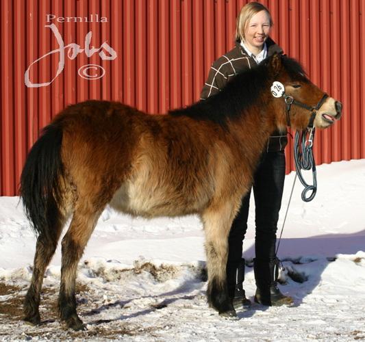 Urivan, Hedemora 2010-02-14. Foto: Pernilla Jobs©