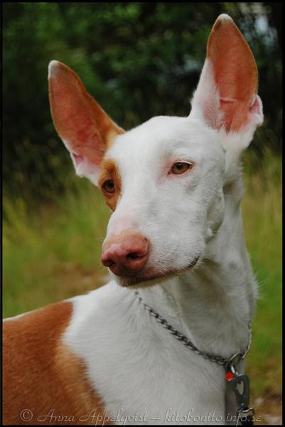 Öronen ska vara rosafärgade och mjuka, ögonen klara och nosen fuktig och fri från sprickor. Foto: KitoBonito